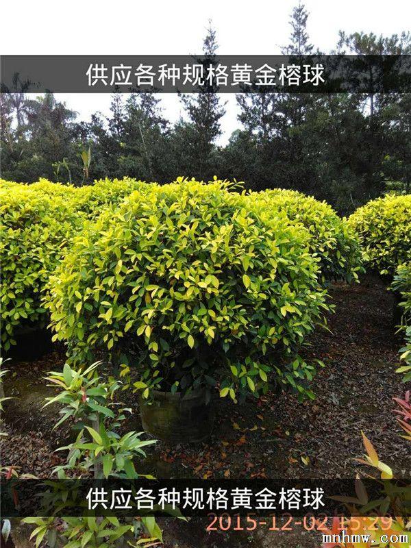 壁纸 成片种植 风景 植物 种植基地 桌面 600_800 竖版 竖屏 手机